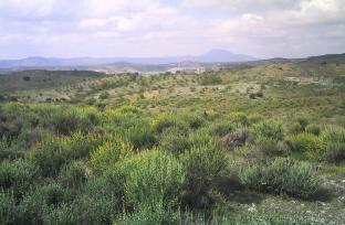 Plot in Lorca for sale