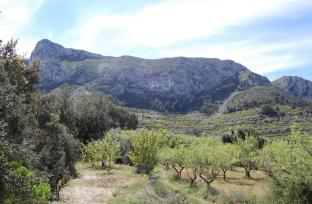Plot  in Al Patro for sale