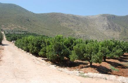 Plot in Adsubia for sale